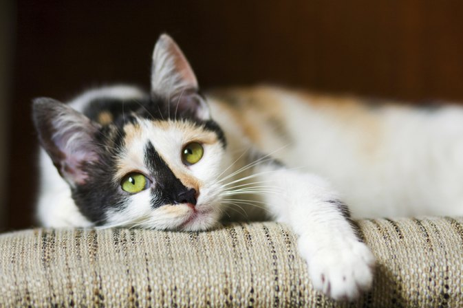 Cat Allergy Symptoms in Infants
