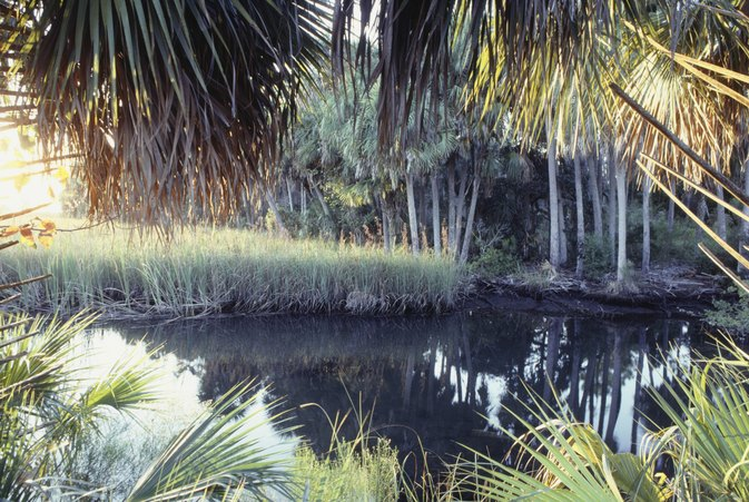 Florida Primitive Camping