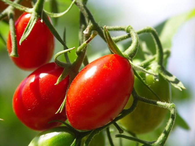 Calories in Sweet Grape Tomatoes