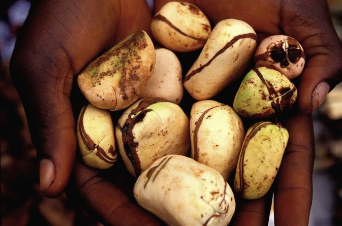 Allergy & the Kola Nut