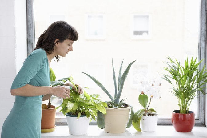 Natural Ways to Add Oxygen to the Air in Your Home