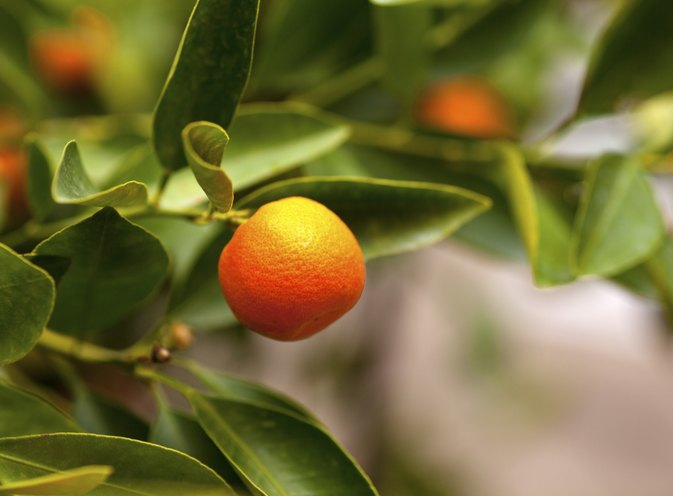 Tangerines & Weight Loss
