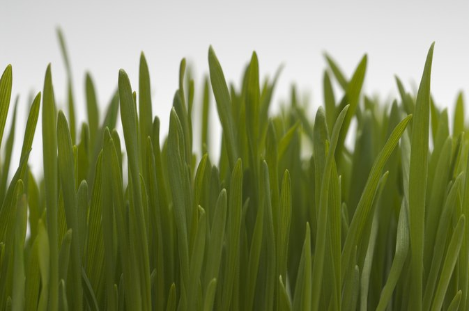 Benefits of Wheatgrass for the Liver