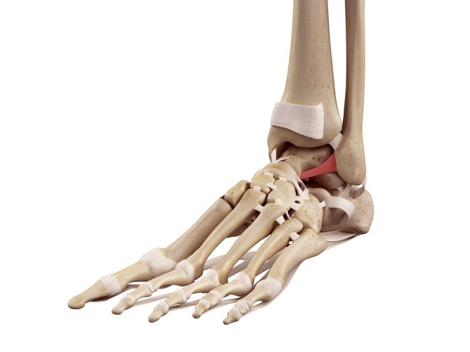 Differences Between Ligaments & Tendons