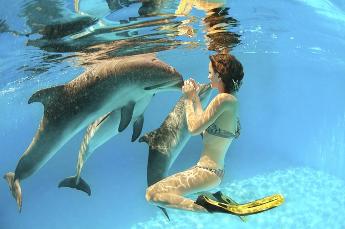 Swimming With Dolphins in Naples, Florida