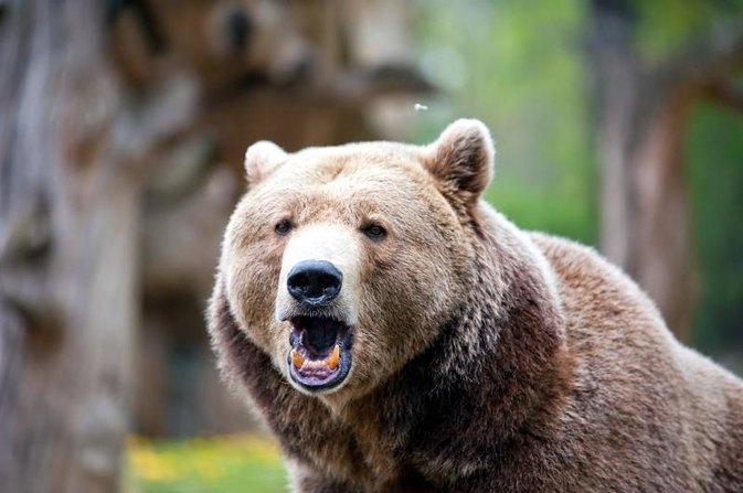 A Bottle of Wine Saved This Man From a Bear Attack