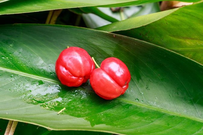 What Is Acerola Extract?