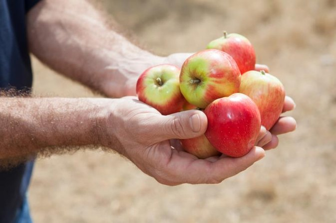 Can Diabetics Eat Apples?