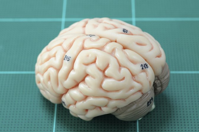 Main Parts of the Lower Brain