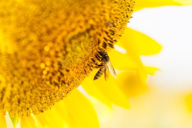 Nutritional Benefits of Flower Pollen