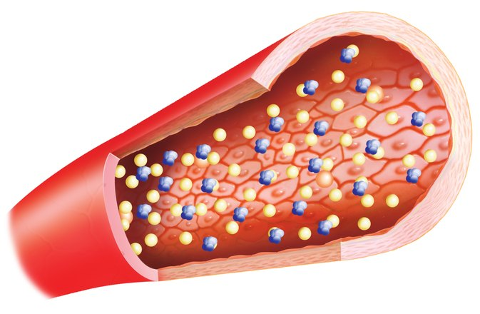 What Are the Sources of LDL & HDL Cholesterol?