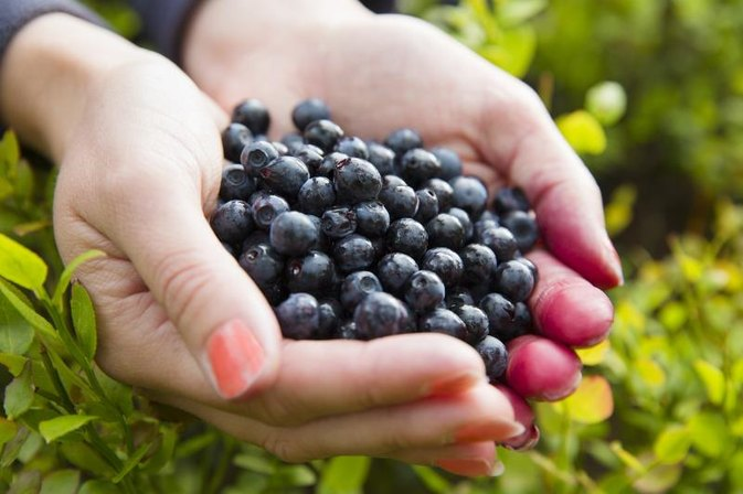 Acai Berry Nutrition Information