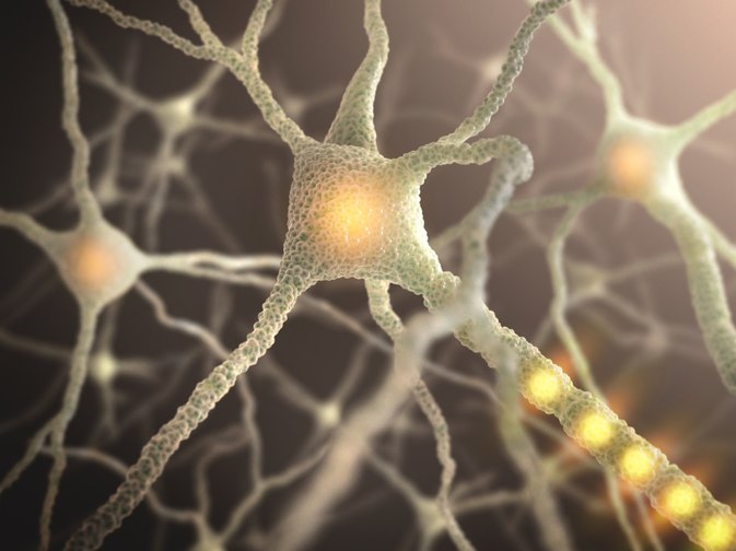 5 Things You Need to Know About Acetylcholine