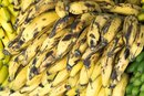 Nutritional Values of Bananas & Plantains