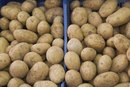 The Risks of Eating Raw Potatoes