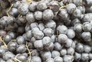 How to Make Homemade Concord Grape Juice