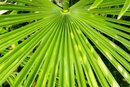 Side Effects of Saw Palmetto on Men