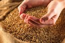 Which Nutrients Do Grains Provide?
