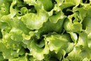 Nutrition Information for Escarole