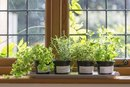 Which Vegetables & Edible Plants Grow Best Indoors?