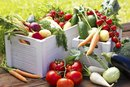 A List of the Easiest Vegetables and Fruits to Digest