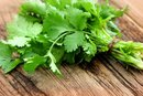 Does Cilantro Cause Heartburn?