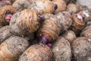 Nutritional Benefits of Taro