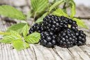 Fiber in Blackberries