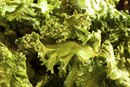 What Are the Benefits From Eating Kale Chips?