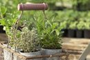 Herbs For Lowering Cortisol Levels