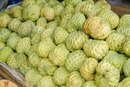 Noni Fruit Side Effects