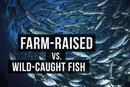 Which Is Better: Wild-Caught or Farmed Fish?