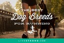 The 15 Best Dog Breeds For Running