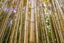 Herbal Extract & Essential Oils of Bamboo