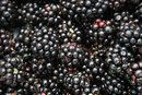An Allergy to Blackberry Salicylates