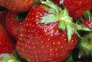 Are Strawberry Seeds & Flax Seeds Digestible?