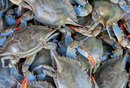 Blue Crab Fishing in Texas