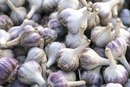 Garlic and Gastritis
