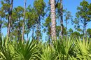 Saw Palmetto & Blood Pressure