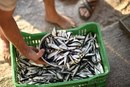 Are Sardines a Good Source of Calcium?