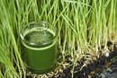 The Benefits of Wheatgrass for Diabetes