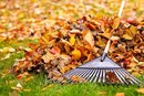 How Many Calories Does Raking Leaves Burn?