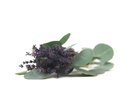 The Side Effects of Eucalyptus Lavender Oil