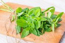 The Dangers of Oregano Oil