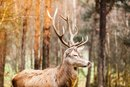 What Are the Health Benefits of Wild Game?