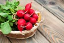 Radishes & Weight Loss