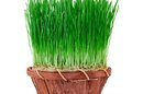 How to Do a Wheatgrass Detox Diet