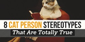 8 Cat Person Stereotypes That Are Totally Tru…
