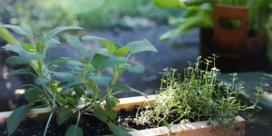 Small-Space Edible Gardening Guide