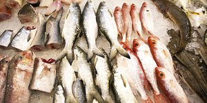 13 Types of Fish to Avoid
